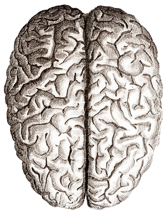 brain-top-view – My Eggclectic Interests II
