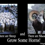 There are Sheep and There Are Sheep